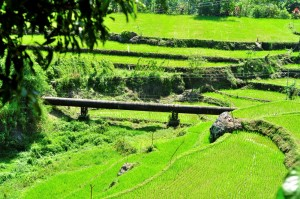 SUPPORTING COMMUNITY STAKEHOLDERS. The conveyance pipes of the Bineng Hydros in La Trinidad had been the walkway of farmers in Bineng. Hedcor also let the farmers tap these pipes for irrigation.  This is one of the many synergies between the company and the community.