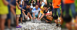Davao Light, its partners, and host communities took time off from their schedules to help these newly hatched pawikans get back to their home.